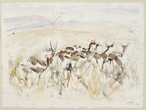 Christine Seifert, Impala Herd (Unframed) (Hungerford Gallery)