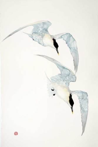Sandwich Terns (Unframed) (Hungerford Gallery)