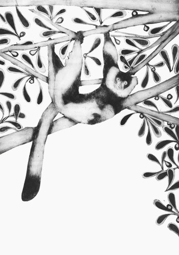 Beatrice Forshall, Black and White Ruffed Lemur (Framed)
