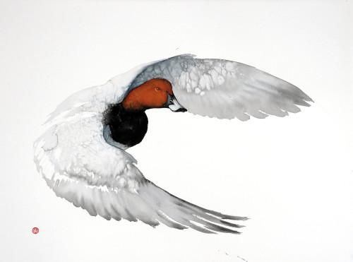 Karl Martens, Pochard Flying (Unframed)