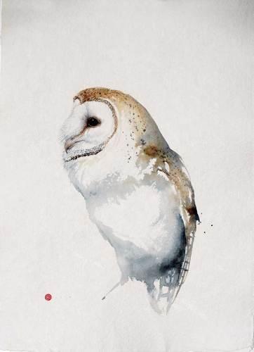 Barn Owl (Unframed) (Hungerford Gallery)