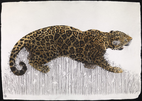 Nikki Stevens, Jaguar - Pushing Up Daisies (London Gallery)