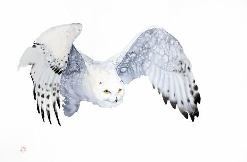 Snowy Owl (Framed) (Hungerford Gallery)