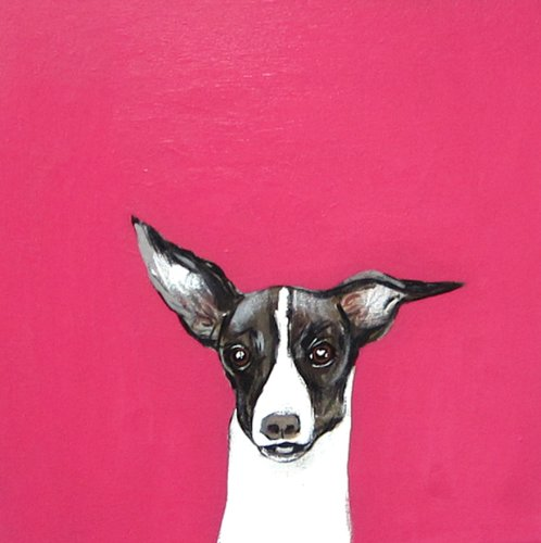 Robert James Clarke, Italian Greyhound