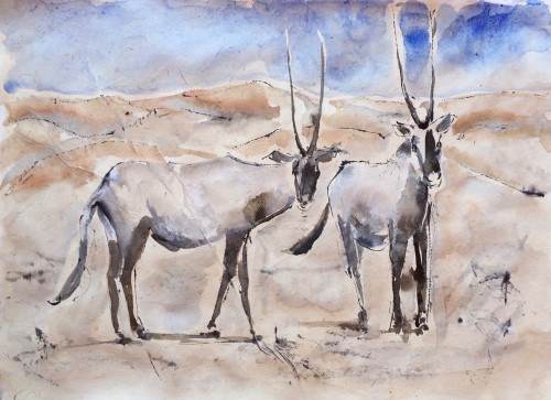 Christine Seifert, Arabian Oryx (Hungerford Gallery)