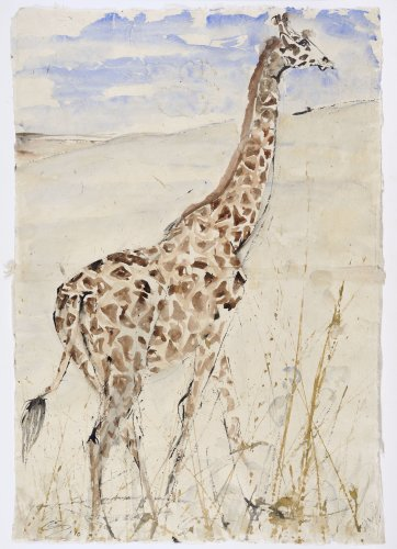 Christine Seifert, Giraffe in profile (Unframed)