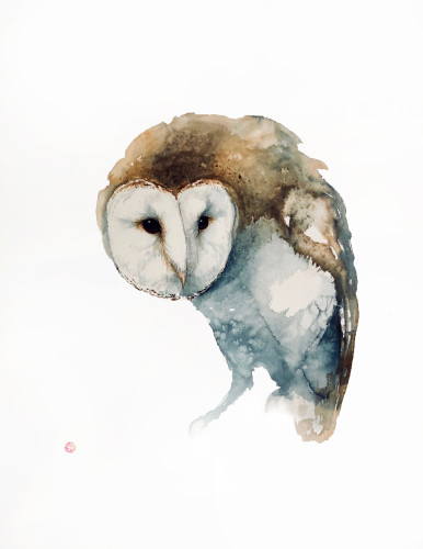 Barn Owl (Hungerford Gallery)