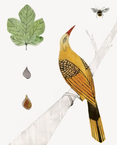 Beatrice Forshall, Golden Oriole (Unframed)