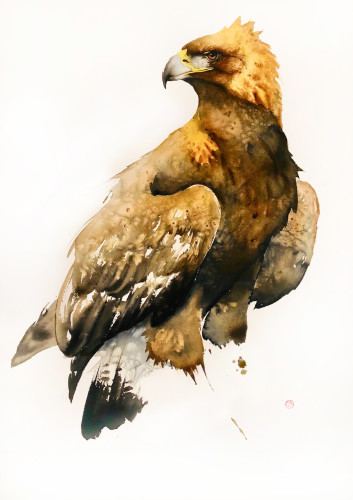 Golden Eagle (Hungerford Gallery)