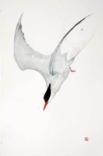 Arctic Tern (Unframed) (Hungerford Gallery)