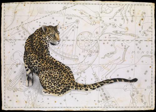 Nikki Stevens, Astro-Cat