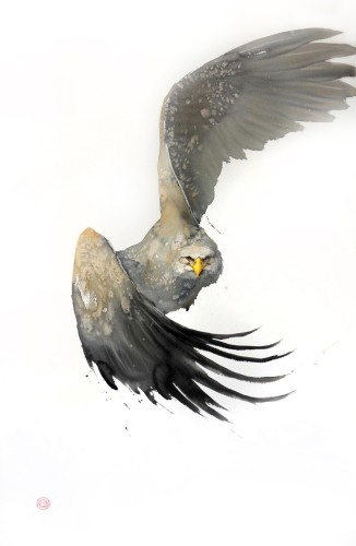 White Tailed Eagle (Framed) Hungerford Gallery