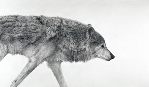 David Hunt, Canis Lupus I (London Gallery)