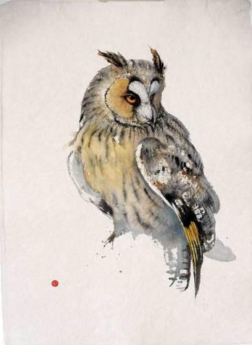 Long-eared Owl (Unframed)