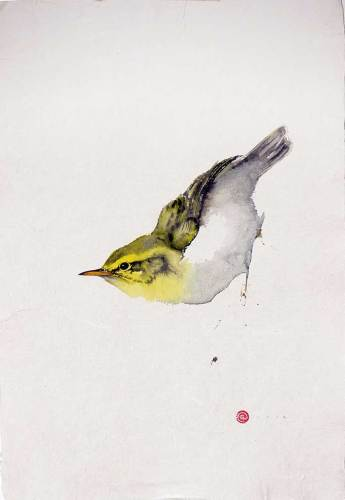 Wood Warbler (Unframed) (Hungerford Gallery)