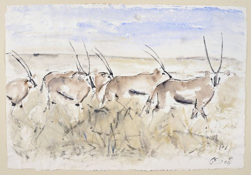 Christine Seifert, Oryx (Unframed) (Hungerford Gallery)