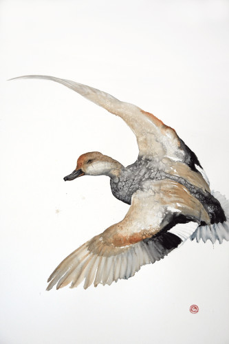 Karl Martens, Gadwall Flying (Unframed)