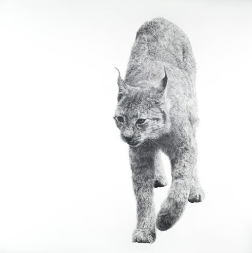 David Hunt, Lynx I