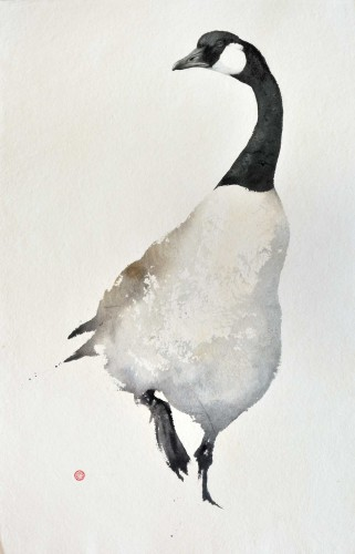 Canada Goose (unframed) (Hungerford Gallery)
