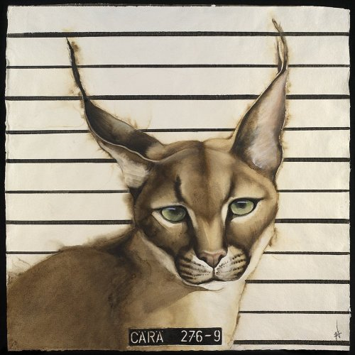 Nikki Stevens, Wanted Caracal