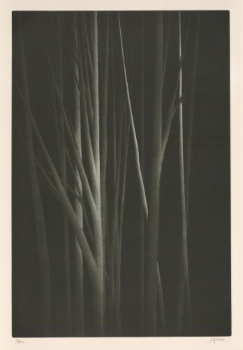 Forest Nocturne III, 2000