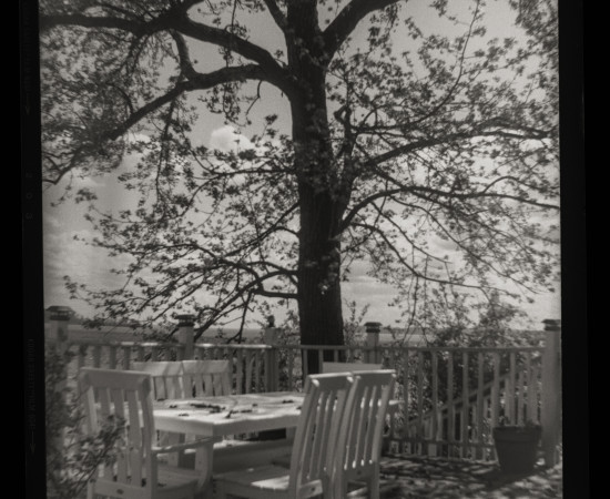 Sandy Rothberg, Gum Tree