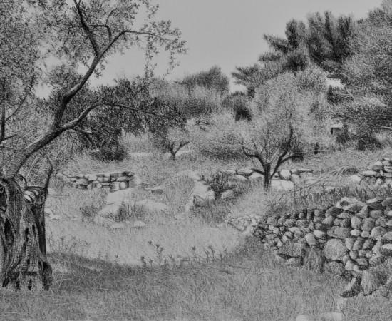 Samah Shihadi, Landscape, Olive Trees, 2018