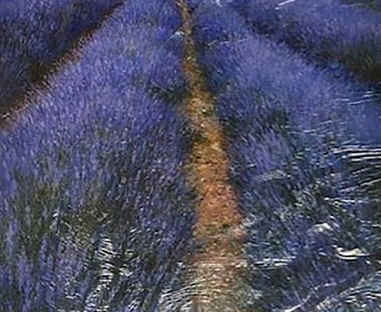 Paul Guy Gantner, Healing Lavender