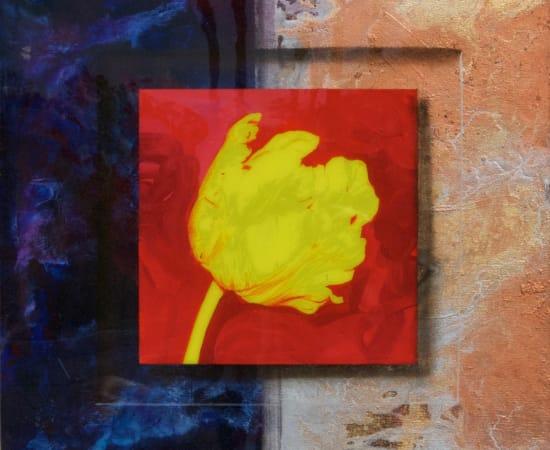 James Jensen, Yellow Tulip 00129