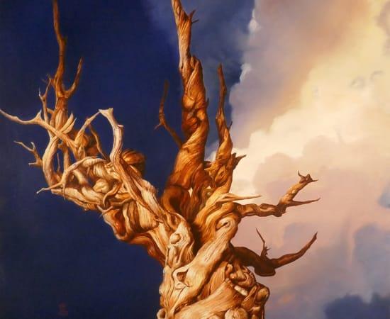 Antal Goldfinger, Bristlecone Pine