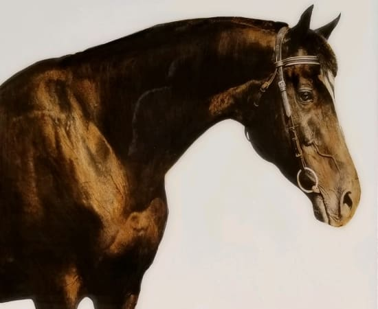 Anke Schofield, Bridled Right