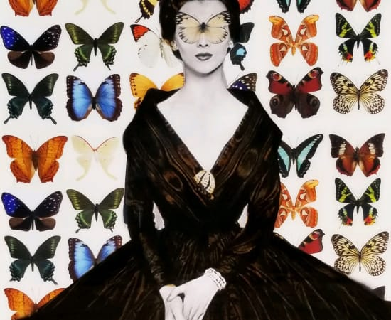 Anke Schofield, Butterflies II