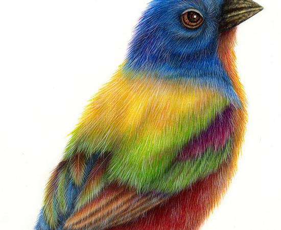 Luis Sottil, Colorin Siete Colores Eggshell Series