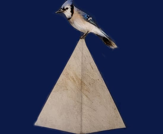 Anke Schofield, Birdy VI