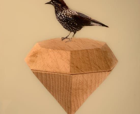 Anke Schofield, Birdy III