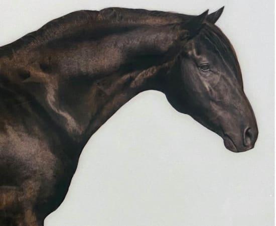 Anke Schofield, Horse 1