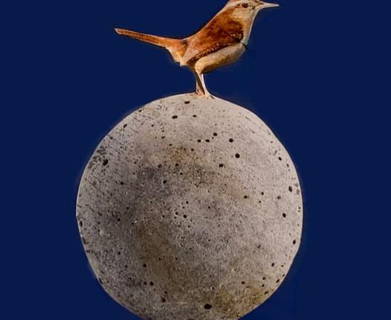 Anke Schofield, Birdy II