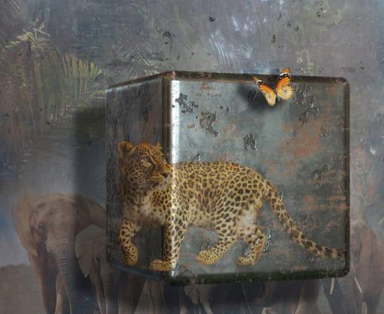 Antal Goldfinger, African Dreams