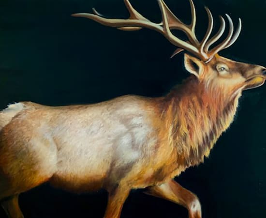 James Jensen, Rocky Mountain Elk