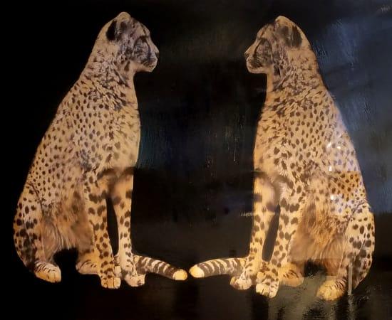 Anke Schofield, Double Cheetah