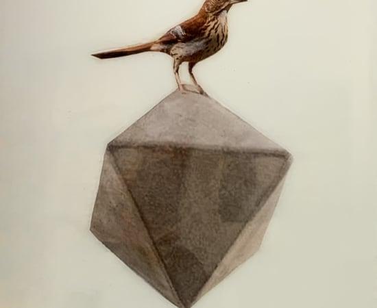 Anke Schofield, Birdy IV