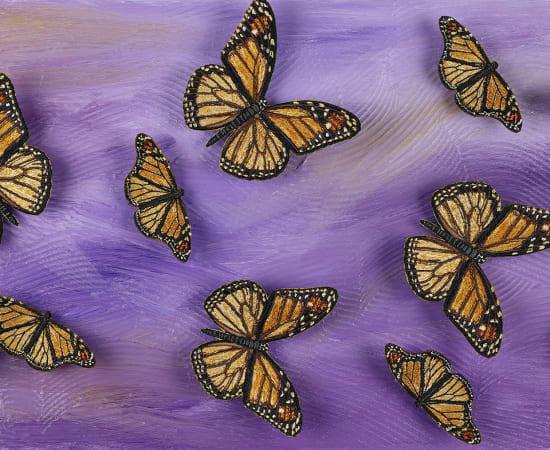Stephen Wilson, Lavender Butterfly Study