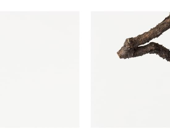 Takashi Tomo-oka, Pine 2, Matsu, 2014