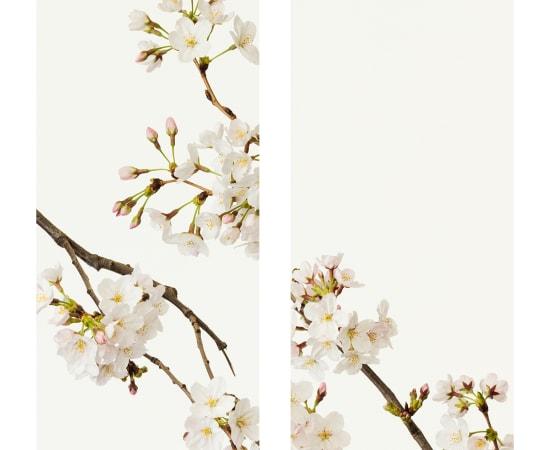 Takashi Tomo-oka, Cherry Blossom 5, Sakura, 2016