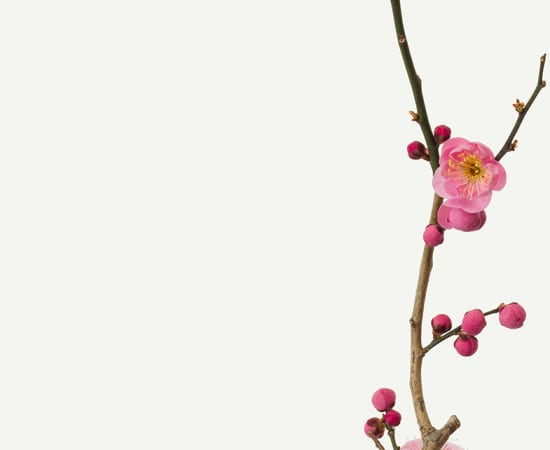 Takashi Tomo-oka, Plum Blossom 4, Kobai, 2018