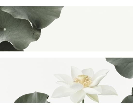 Takashi Tomo-oka, Kuwana White Lotus 2, Kuwana-Hakuren, 2016