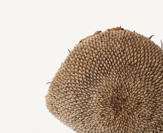 Takashi Tomo-oka, Sunflower2, Himawari, 2015