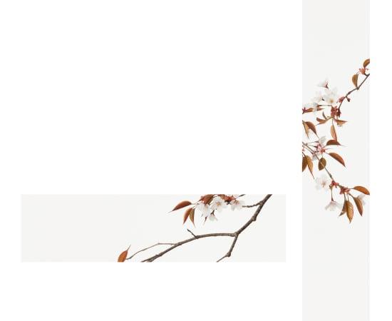 Takashi Tomo-oka, Mountain Cherry Blossom 1, Yamazakura, 2015