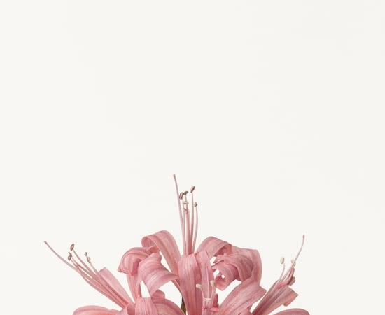 Takashi Tomo-oka, Diamond Lily 1, Diamond Lily, 2012