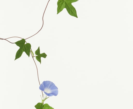 Takashi Tomo-oka, Morning Glory, 2010
